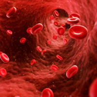 Research redefines how stem cells make blood