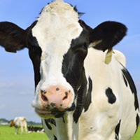 Increasing competitiveness of Canada's dairy industry