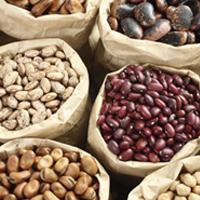 Spilling the beans on gut health