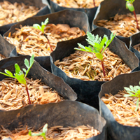 New propagation trays improve tree health and growth
