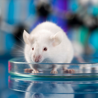 Characterizing the mouse genome reveals new gene functions and their role in human disease